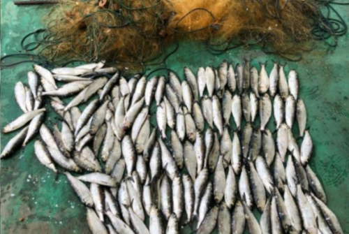 Селедка на 200 тысяч: в Одесской области задержали браконьеров