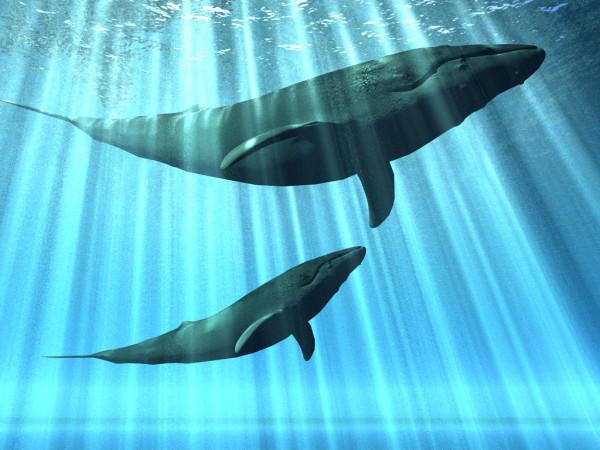 Одесские биологи узнали, сколько китов и дельфинов обитает в Черном море